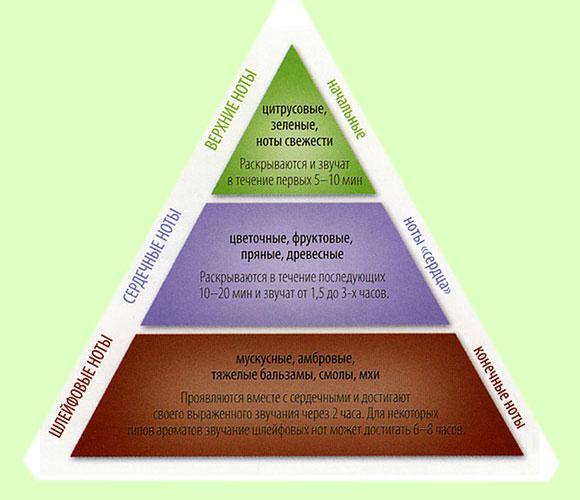 Пирамида: ноты парфюма